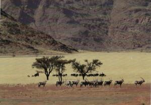 Distant Oryx